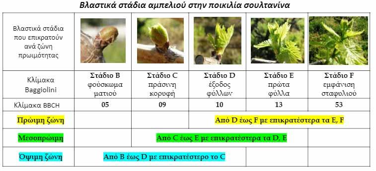 Αμπέλι: Ανοιξιάτικες προσβολές - Plant Protection